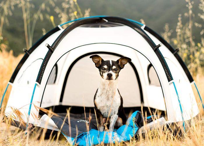 Best Pet Tents