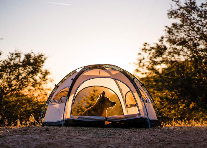 Yosemite Pet Dome Tent
