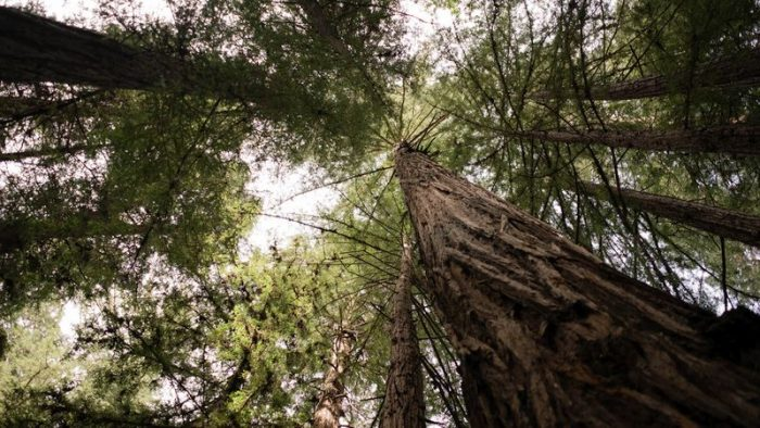 Samuel P Taylor State Park